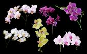 Six orchid   branches — Stock Photo