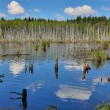 Clouds reflection in swamp — Stock Photo #55500575