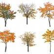 Autumn trees — Stock Photo #55501575