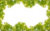 Green oak  frame — Stockfoto