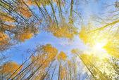 Zlaté podzimní stromy — Stock fotografie