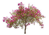 Blooming pink tree — 图库照片