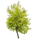 Zelené letní strom — Stock fotografie