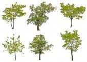 Zelené letní stromy — Stock fotografie