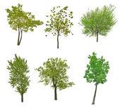 πράσινα δέντρα — Stock fotografie