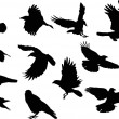 Crow silhouettes — Stock Vector #55580933