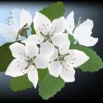 Постер, плакат: Apple tree blossom