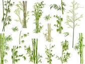 Bamboo branches — Stock Vector
