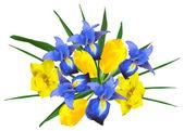 Narcissus, iris and tulip flowers — Stock Vector