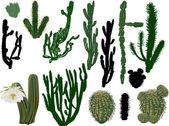 Thorny cactus colection — Stock Vector