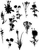 Garden flowers silhouettes — Stock Vector