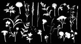 White wild flowers silhouettes — Stock Vector