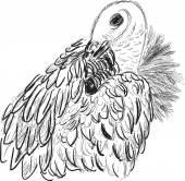 Griffon sketch — Vettoriale Stock