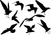Gull silhouettes — Stock Vector