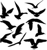 Gull black silhouettes — Stock Vector