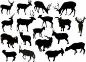 Deers and goats silhouettes — Stock Vector