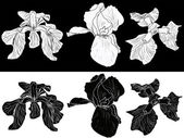 Iris flowers sketches — Stockvektor