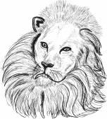 Lion head sketch — Stock Vector