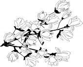 Magnolia blossoming branch — Stock Vector