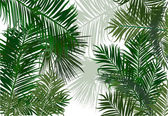Palm and fern leaves — Vettoriale Stock
