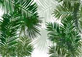 Palm and fern leaves — Stockvector