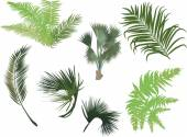 Green palm and fern leaves — Stockvector