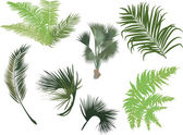 Green palm and fern leaves — 图库矢量图片