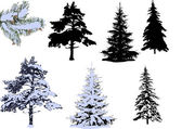 Pines and firs in snow — Stock Vector