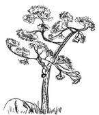 Pine   sketch — Stock Vector
