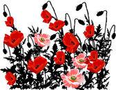 Flores Papoulas — Vetor de Stock