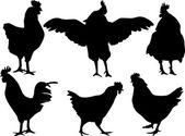 Chicken silhouettes — Vecteur