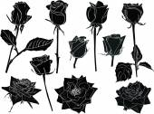 Black and white roses sketches — Vetorial Stock