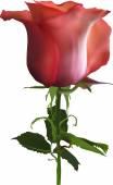 Dark orange rose — Stock Vector