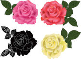 Rose four colors — Stock Vector