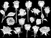 White roses sketches — Vettoriale Stock