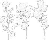 Gül çiçek — Stok Vektör