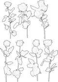 Rose flowers — Stock Vector