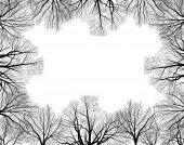 Black bare trees  frame — Stock vektor
