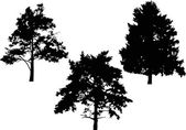 Pines silhouettes — Stock Vector