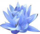 Mavi lily çiçek — Stok Vektör