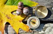 Compass with leaves and acorns — Stock Photo