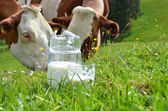 Milk and cows. Emmental region, Switzerland  — Stock Photo
