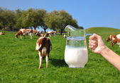 Jug of milk in hand against — Stock Photo