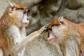 Blessing monkey — Stock Photo