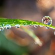 Grass with drops — Stock Photo #64378359