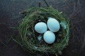 卵と巣します。 — ストック写真