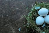 Nest met eieren — Stockfoto