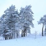 Winter — Stock Photo #61401899