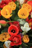Tulip bouquet — Stock Photo