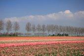 Flower industry fields — Stock Photo